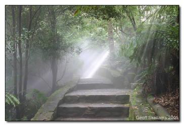 Mist In The Rainforest by Eynowd