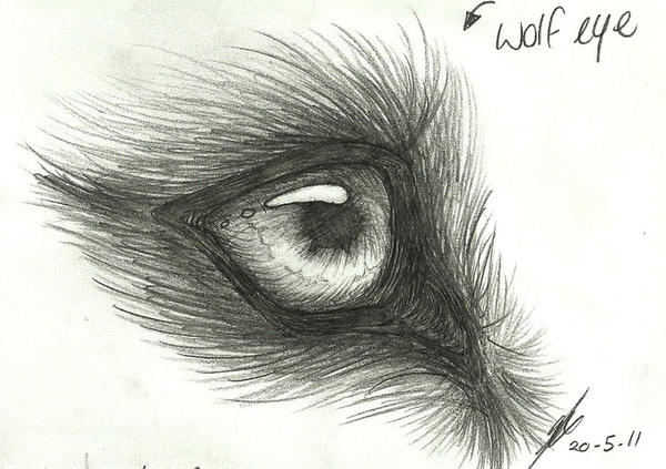 wolf - eye study by wolfspirit395