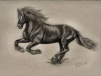 BlackMilky-Horse by NickMoscovitz