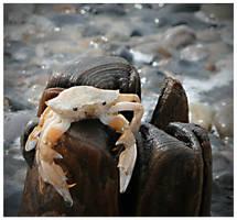Mr. Crabs by Wurstgulasch