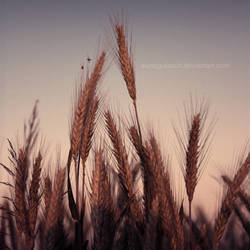 evening in the field by Wurstgulasch