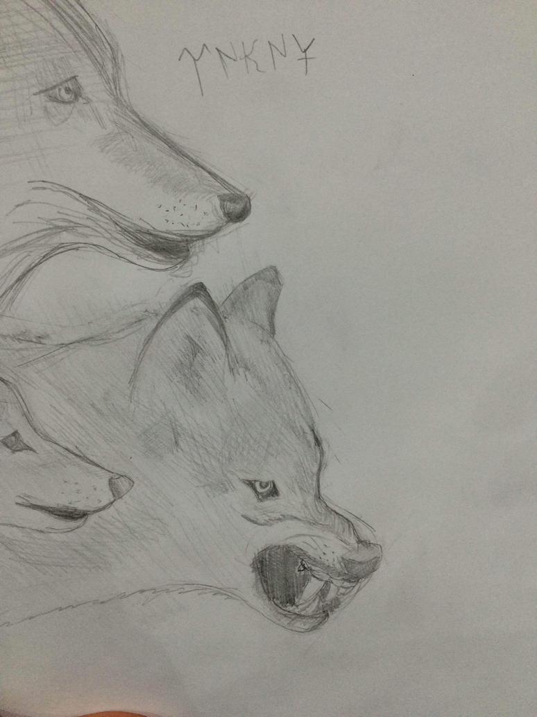 Wolves by Bayramtelli