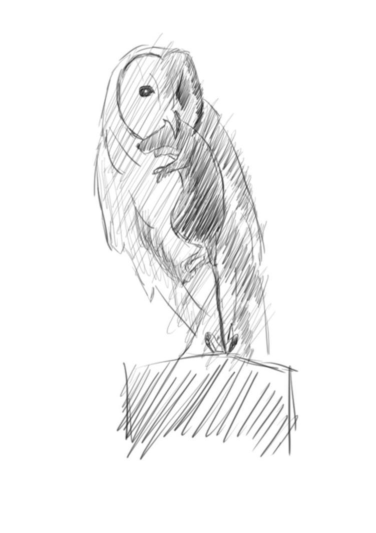 An Owl by Bayramtelli