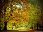 Autumn magic .