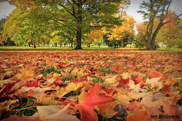 The Maple carpet . by 999999999a