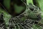 Liquid web .