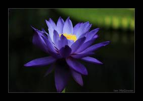 Blue dream . by 999999999a
