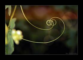 Hop curl romance . by 999999999a