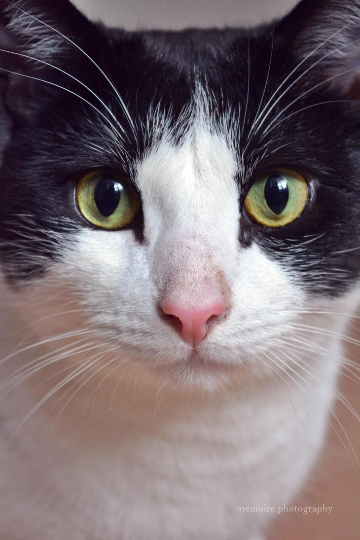Cat Portrait by Gluecksbaerchi