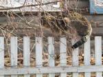 Convenient fence for ambush by Bastet-SAN