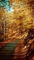 Autumn Road by AndreyAk