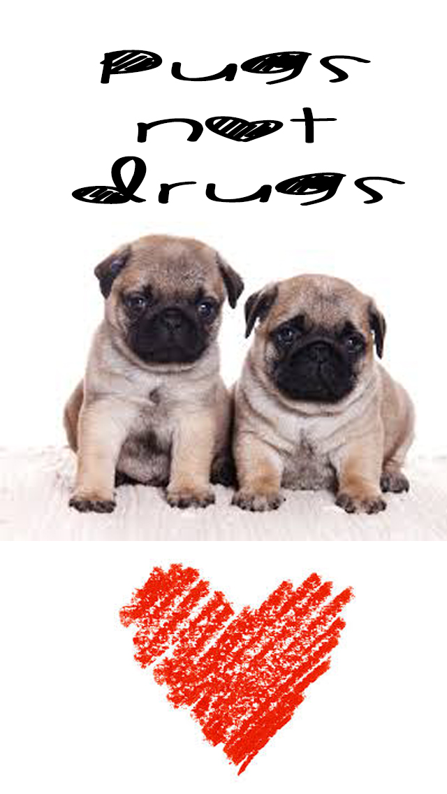 Pugs Not Drugs Wallpaper Iphone 5 5c 5s By Drew Sincock