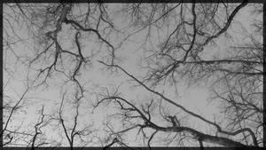 Branches by mmmedo