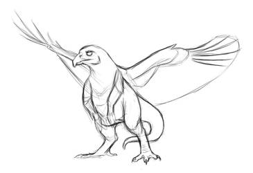 Red Tailed Hawk Dragon Sketch by MythsAndDreams