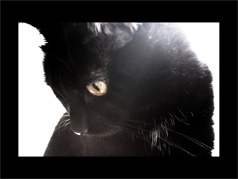 My beloved cat 02 by ccouette