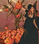 The special pumpkins