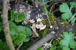 Garden fungus
