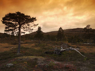 Borgefjell evening by Mycelius