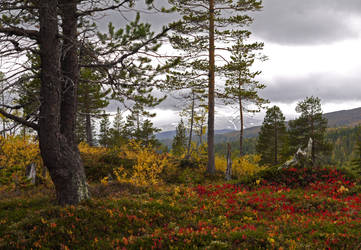 Colorful Borgefjell National Park by Mycelius