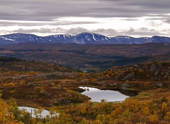 Colorful Borgefjell National Park II by Mycelius