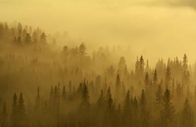 One misty morning by Mycelius