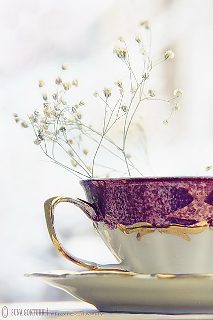 A Cup of Peace.. by pacificdreams