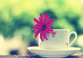 Herbal Tea.. by pacificdreams
