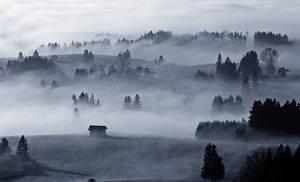 Bavarian Haze