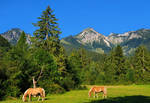 Scenic Alps by mutrus