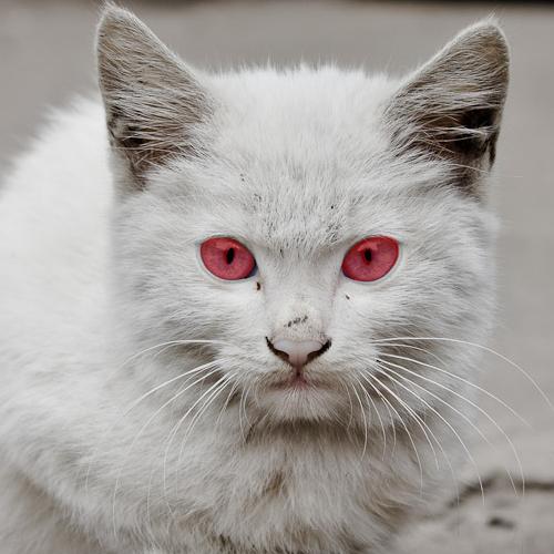 cat led light