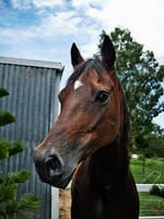Horse by fartoolate