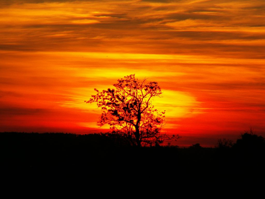 lonely tree at sunset by thomato80 on deviantART
