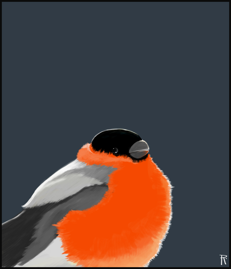 Bullfinch King by robertas