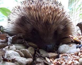 Benson the Hedgehog by Satorstar