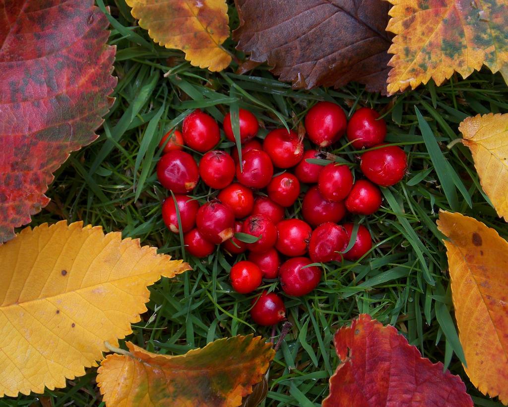 Love Autumn by Satorstar
