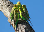The BUDGIE club