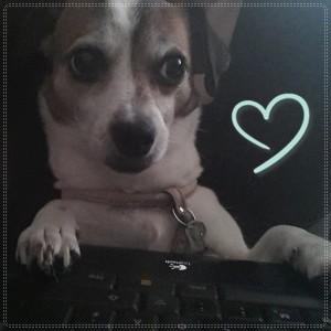 AureliaWolflady's Profile Picture