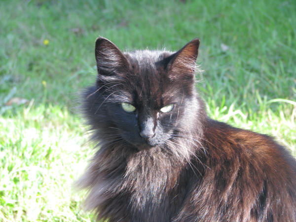 Fluffy Cats Breeds - Cats Types