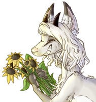 Sunflowers [feral]