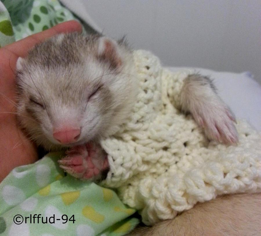 Ferret Sweater!