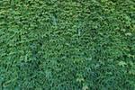 Leaf Texture 1-Stock
