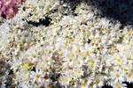 Flower Texture 2-Stock