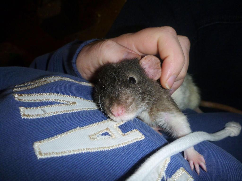 Rat hugs by usedbooks
