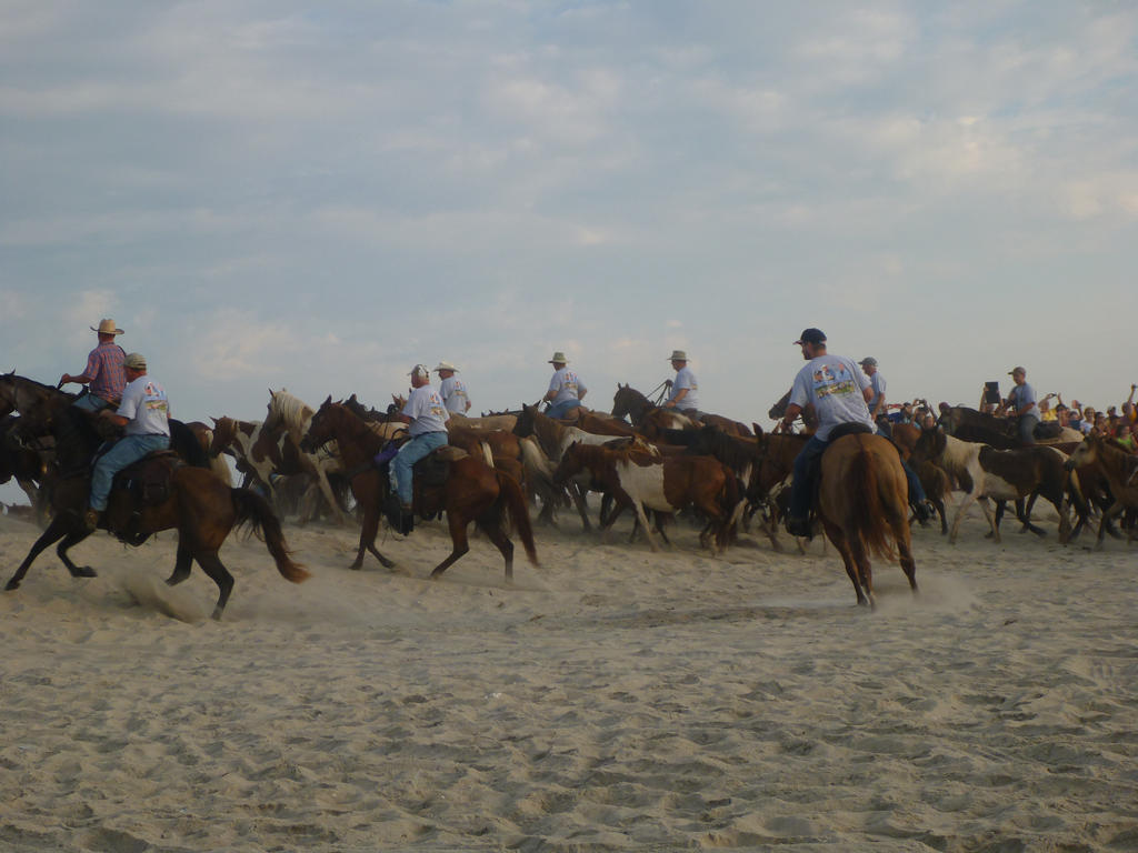 Chincoteague Pony Beach Walk 3 by usedbooks