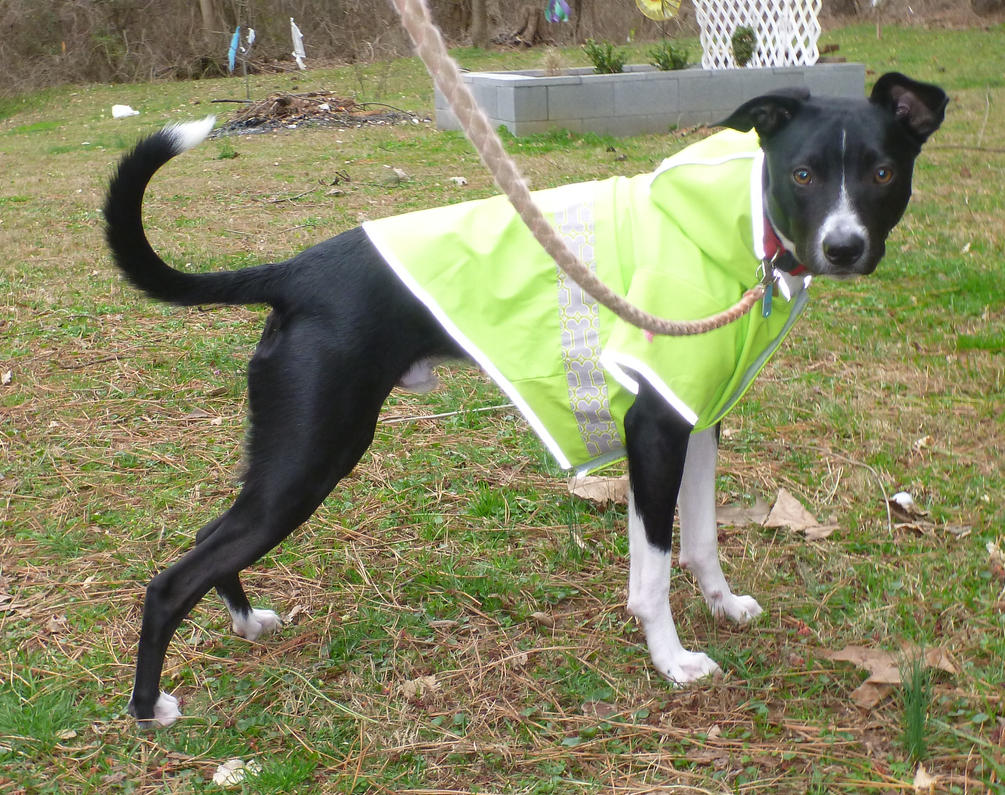Lupin in a raincoat by usedbooks