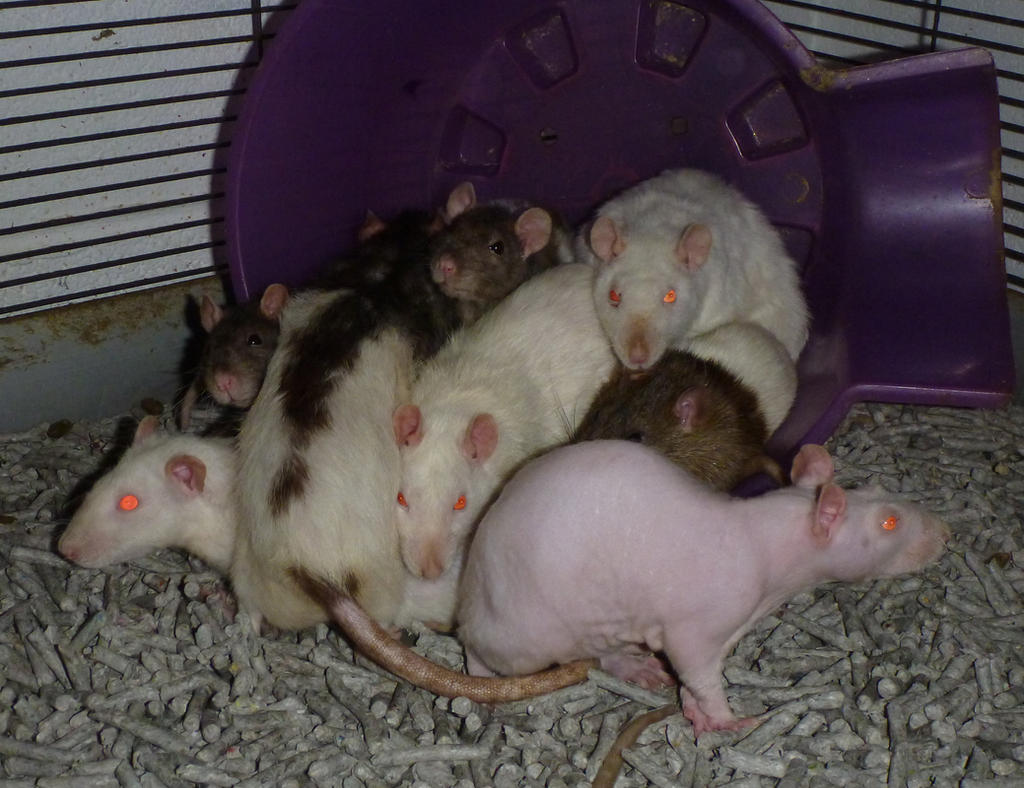 Girl pile by usedbooks