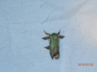 Moth 1 by usedbooks