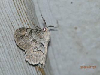 Moth 3 by usedbooks