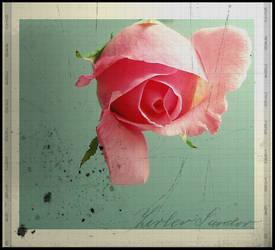 ...a rose