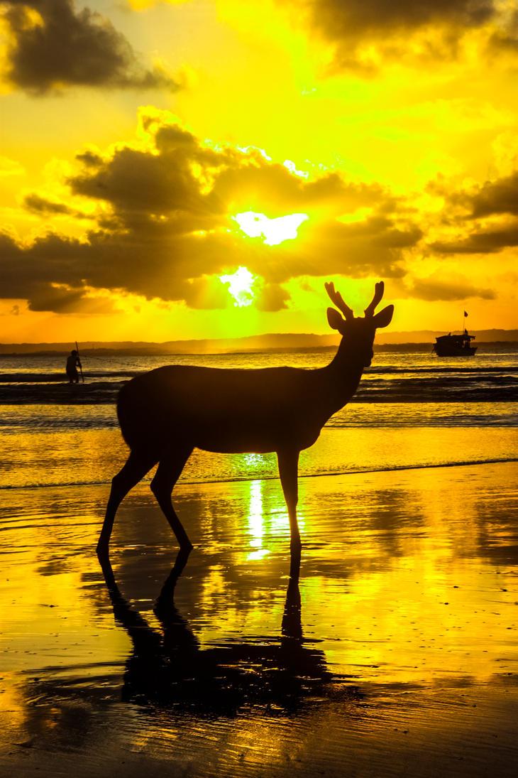Deer by RayChristian